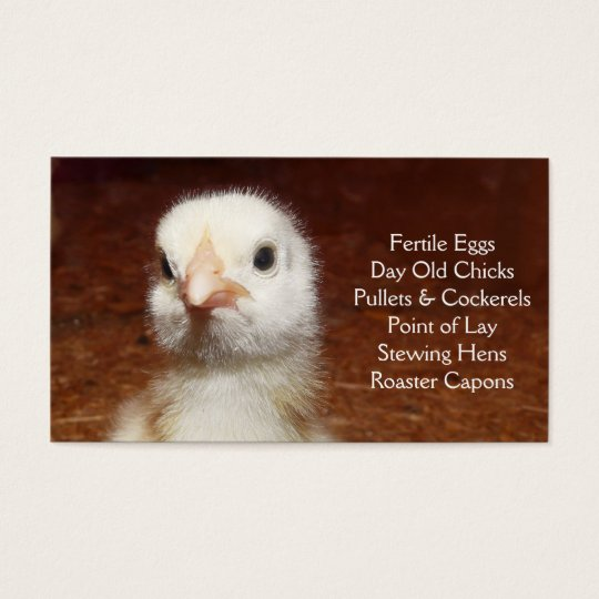 Day Old Chick - Layers or Broilers Farm