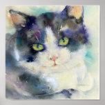 Daydreamer Cat Poster