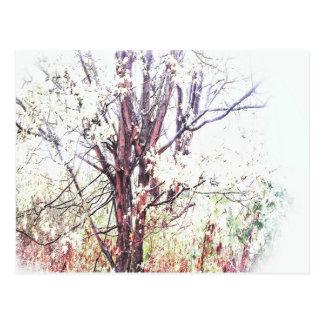 DayDreams - card shrub