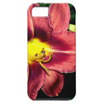 Daylily At Dusk iPhone 5/5S Cases