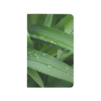 Daylily Leaves after a Spring Shower Journal