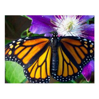 Dazzling Butterfly Postcard