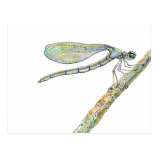 Dazzling Dragonfly on a Branch Postcard