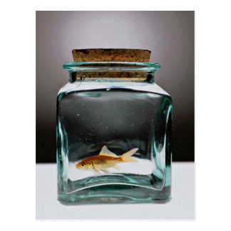 Dazzling Goldfish in jar Postcard