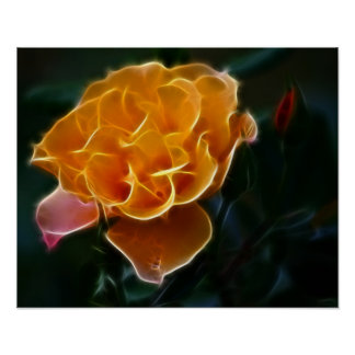 Dazzling orange rose and meaning poster