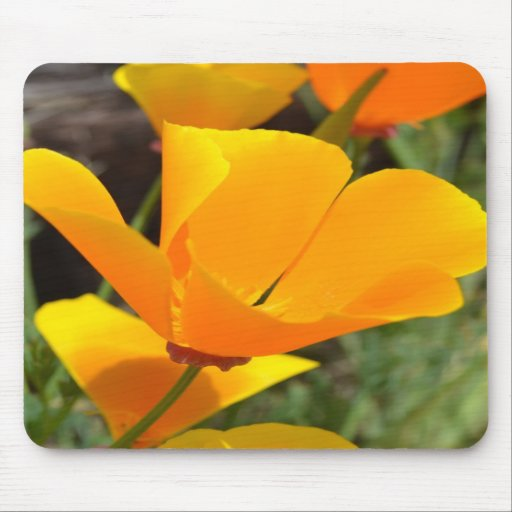 Dazzling Poppy Mousepad