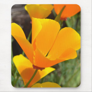 Dazzling Poppy Mouse Pad