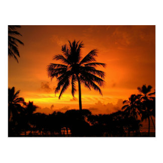 Dazzling Tropical Sunset Postcard
