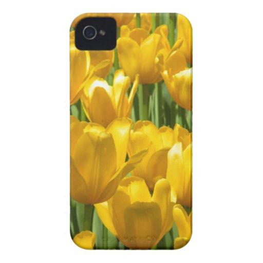 Dazzling Yellow Tulip Border Blackberry Cases