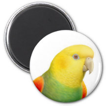 Dbl Yellow Headed Amazon Magnet