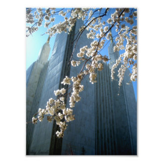 DC Temple Photograph
