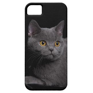 De Shorthair capa de iphone 5 britânico mal There™ iPhone 5 Case