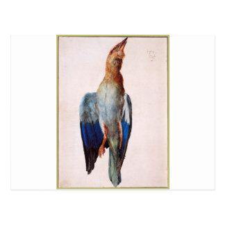 Dead Bluebird by Albrecht Durer Postcard