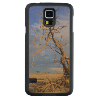 Dead Camel Thorn (Acacia Erioloba) Tree Carved Maple Galaxy S5 Case