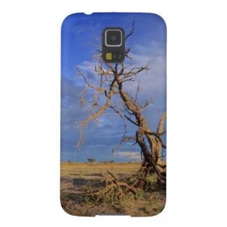 Dead Camel Thorn (Acacia Erioloba) Tree Cases For Galaxy S5