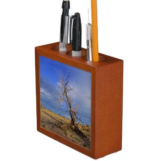 Dead Camel Thorn (Acacia Erioloba) Tree Desk Organiser