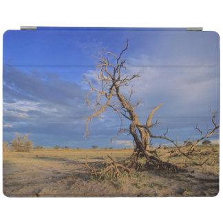 Dead Camel Thorn (Acacia Erioloba) Tree iPad Cover