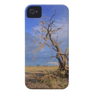 Dead Camel Thorn (Acacia Erioloba) Tree iPhone 4 Cover