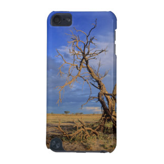 Dead Camel Thorn (Acacia Erioloba) Tree iPod Touch (5th Generation) Case