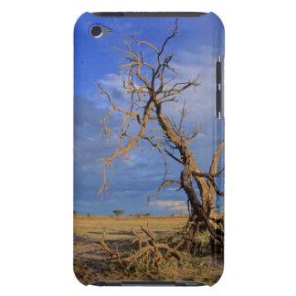 Dead Camel Thorn (Acacia Erioloba) Tree iPod Touch Case