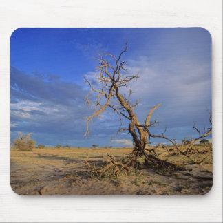 Dead Camel Thorn (Acacia Erioloba) Tree Mouse Mat