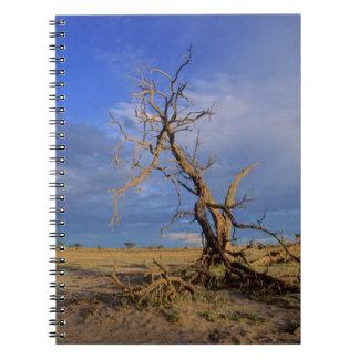 Dead Camel Thorn (Acacia Erioloba) Tree Notebook