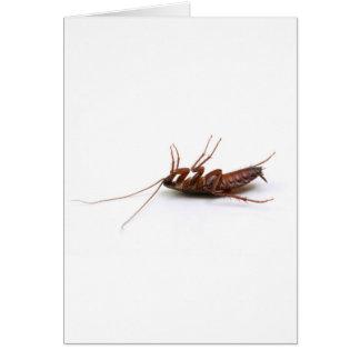 Dead cockroach card