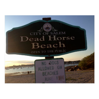 Dead Horse Beach Sign Salem MA Photo Postcard