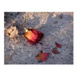 Dead Rose (colour) Postcard
