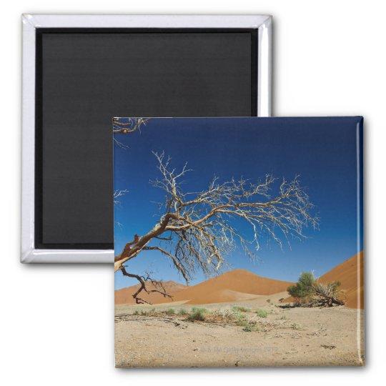 dead tree at dune 45 in desert Landscape of Square Magnet