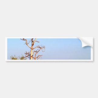 dead tree bumper sticker