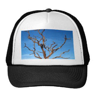dead tree trucker hat