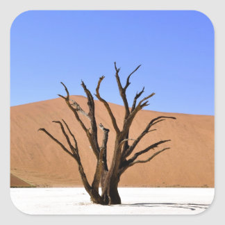 Dead tree in Namib desert Square Sticker