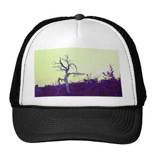 dead tree purple yellow leaves sky hat