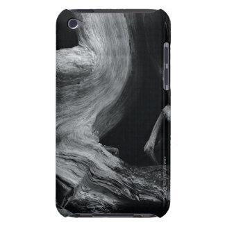 Dead tree trunk iPod Case-Mate case