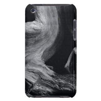 Dead tree trunk iPod touch Case-Mate case