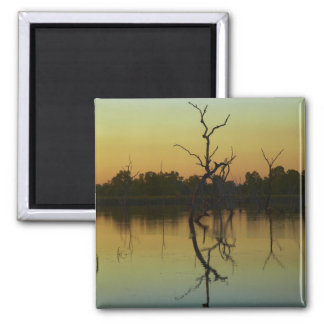 Dead trees reflected in Lily Creek Lagoon, dawn Square Magnet