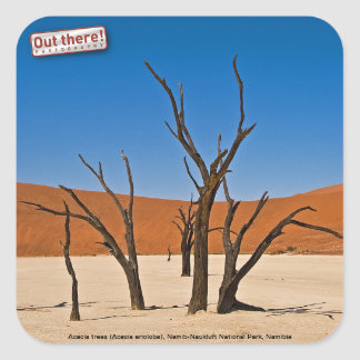 Deadvlei Square Sticker