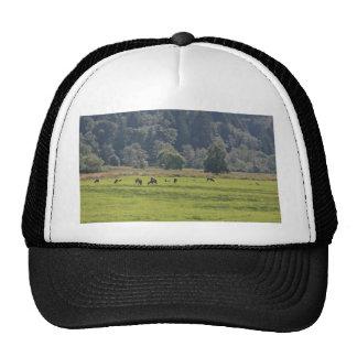 Dean Creek Elk, Oregon Cap