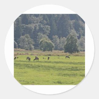 Dean Creek Elk, Oregon Stickers