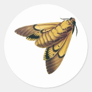 Death s Head Hawk Moth Round Stickers