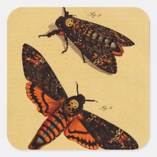 Death s Head Moth Square Sticker