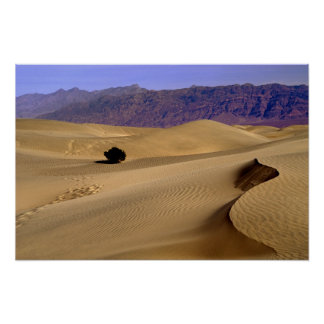 Death Valley sand dune Poster