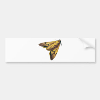 Death's Head Hawk Moth Bumper Sticker