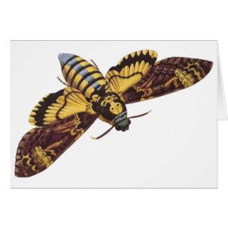 Death's Head Hawk Moth Card