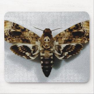 Death's Head Hawkmoth Acherontia Lachesis Mouse Mat
