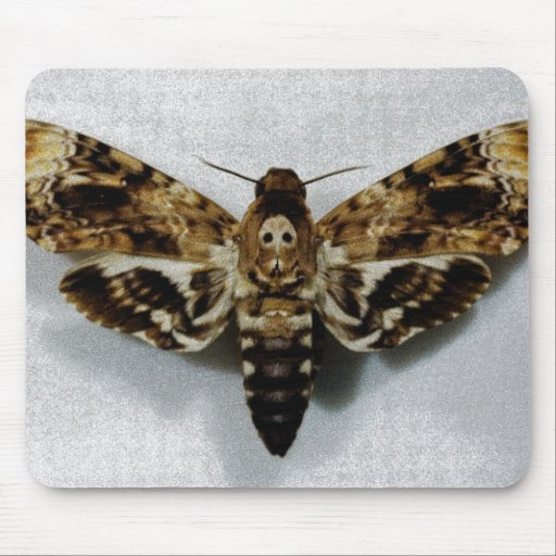 Death's Head Hawkmoth Acherontia Lachesis Mousepad