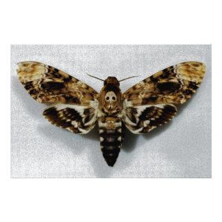 Death's Head Hawkmoth Acherontia Lachesis Photo