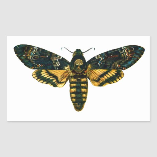 Death's Head Moth Rectangle Stickers
