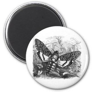 Deathshead Hawk Moth 6 Cm Round Magnet
